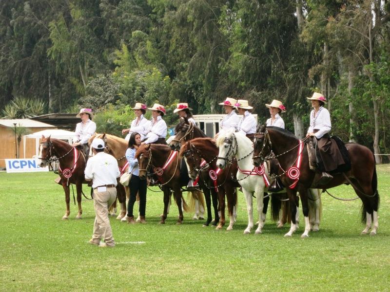 XLIII Concurso Caballo Peruano Paso Los Pumas Cieneguilla 17