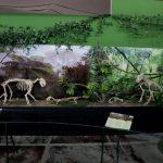 parque-imaginacion-lima-science-center-23