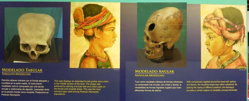 paracas-skulls-deformed-tabular-anular-modeling-peru